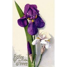 Carte de voeux - Iris